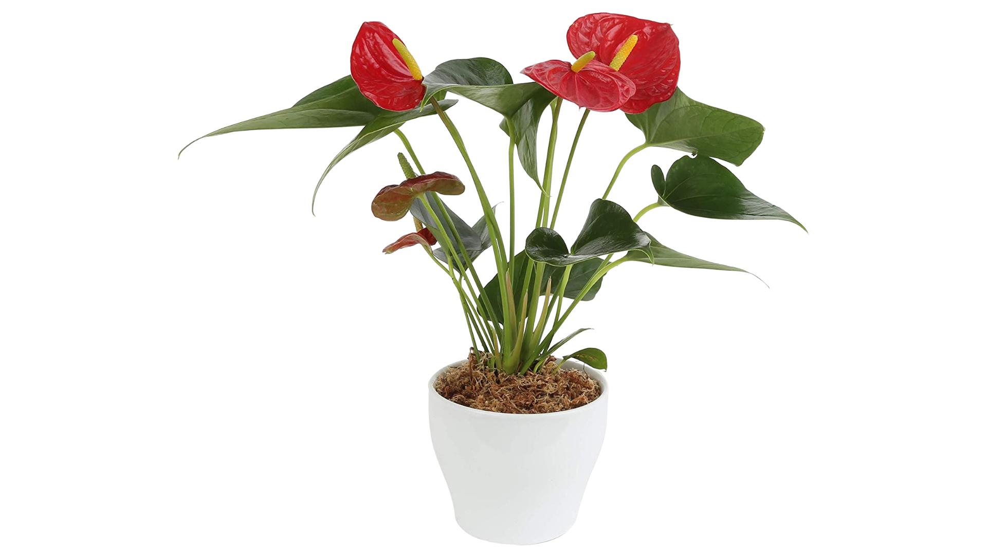 Costa Farms best winter indoor plants
