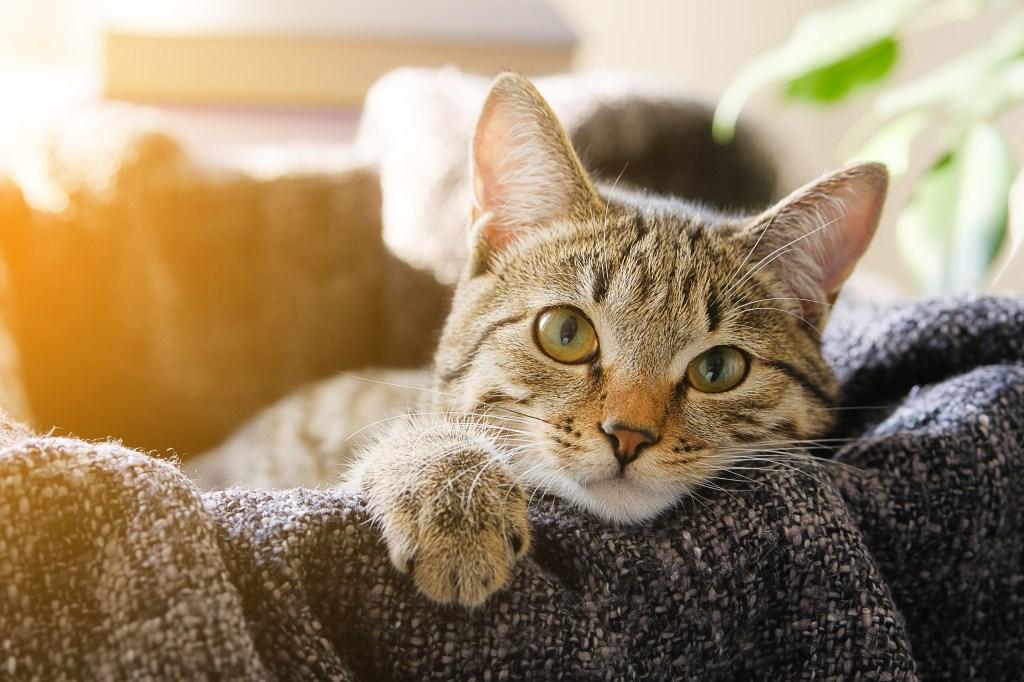 cat lying in a basket