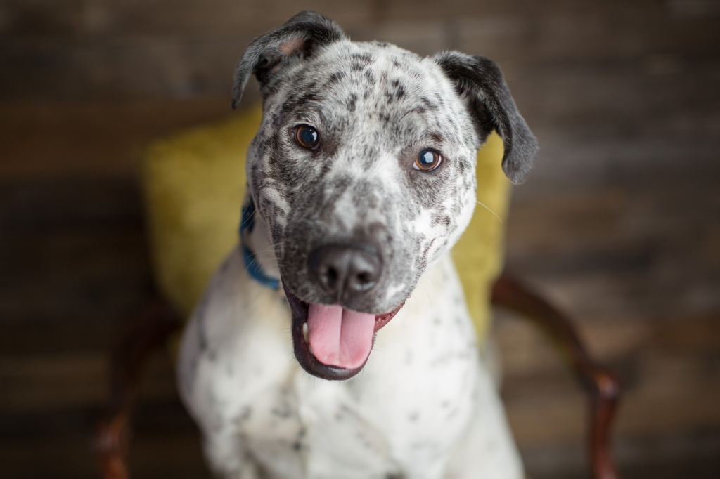 Mixed breed dog with spots