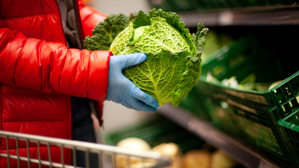 Gloved hands holding lettuce