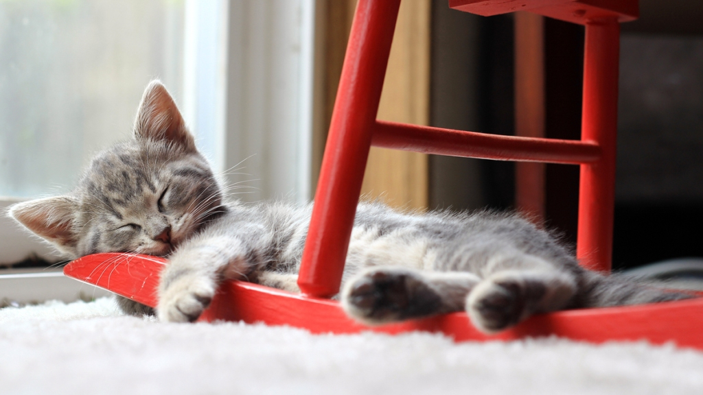 Small gray kitten sleeping on the bottom of a red rocking chair