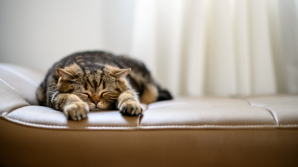Tabby cat flattened out asleep on tan leather chair