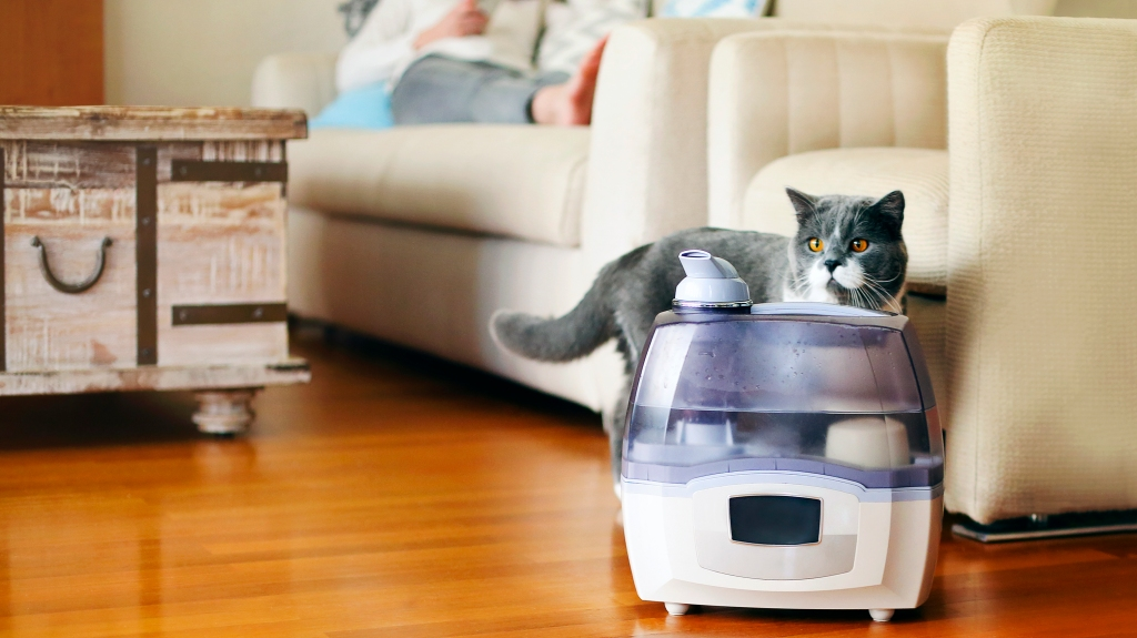 Cat standing next to a humidifier