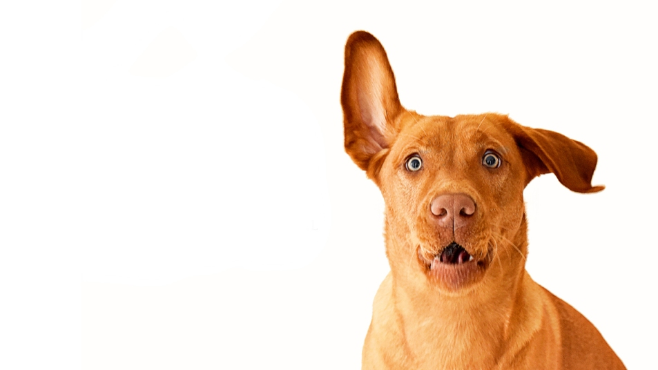 Things your dog can sense story image