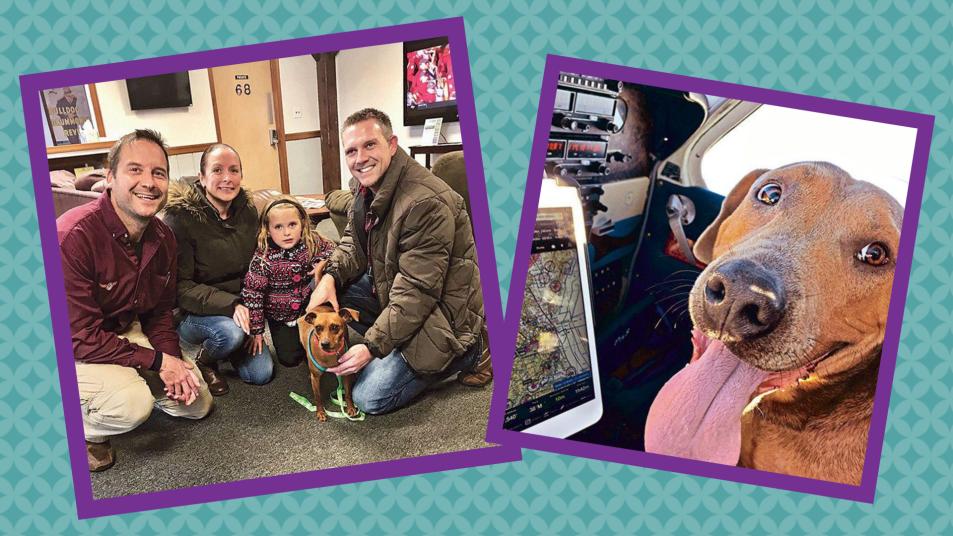 stray dog pet adoption